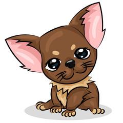 chihuahua small cute dog with big eyes