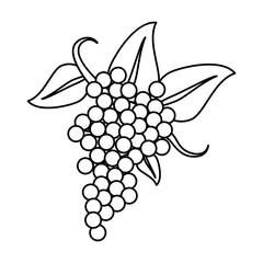 bunch grape wine thin line vector illustration eps 10