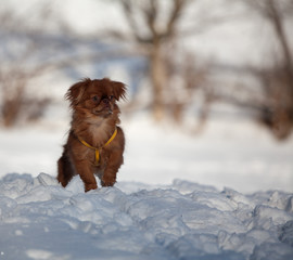 cute dog standing on the snow
