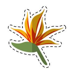 cartoon bird of paradise flower vector illustration eps 10