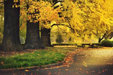 Beautiful Colorful Autumn maple and gingko Leaves / green, yellow, orange, red in shinjuku park