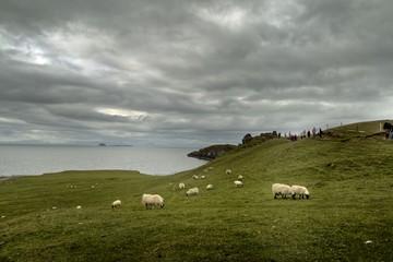 Landscape of Highland