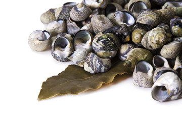Cooked sea snails