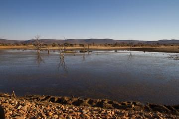 Water Hole, Madikwe