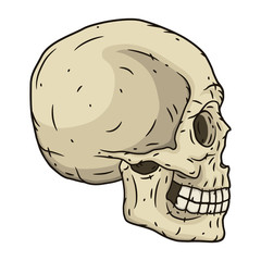 Human skull in hand drawn style. Vector illustration.