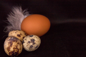 Quail eggs and chicken with feathers on a black background.
