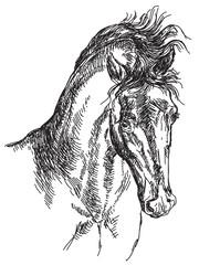 Horse head vector hand drawing illustration