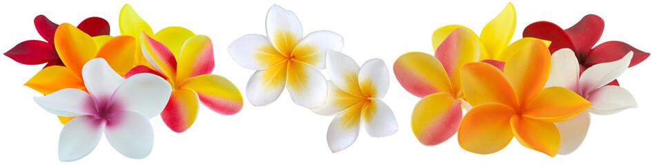 Foto op Textielframe Frangipani fleurs de plumeria, frangipanier, fond blanc