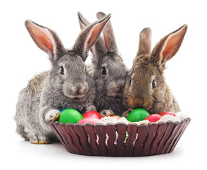 Easter rabbits with colored eggs.