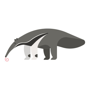 templateVector flat style illustration of anteater.