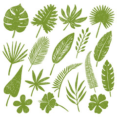 hand drawn tropical leaves.