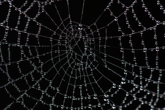 Spider web close-up.The shot of the big cobweb close-up, Spiderweb with dew drops