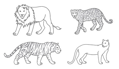 Set of vector big cats in contours