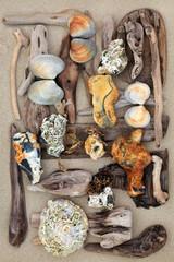Driftwood Seashells and Rock Abstract