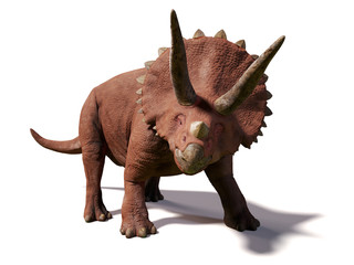 Triceratops horridus,  lived between 66 and 68 million years ago (3d illustration isolated on white background)