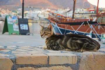 The cat in the port