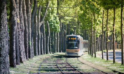 Tram railroad in Brussels. Public transport of the Belgian capital. Tunnel of trees.
