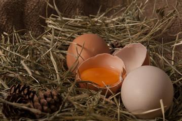 kot zjadający jajko w gnieździe