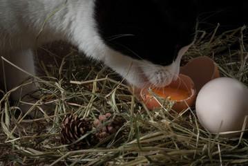 kot zjadający surowe jajko w gnieździe