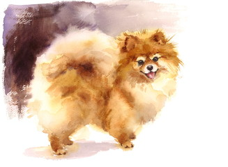 Watercolor Dog Pomeranian Portrait Hand Painted Cute Animals Pets Illustration
