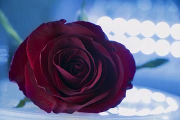 red rose bokeh lights