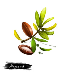 Hand drawn illustration of Argan nut or Argania spinosa isolated on white background. Organic healthy food. Digital art with paint splashes drops effect. Graphic clip art for design, web and print.