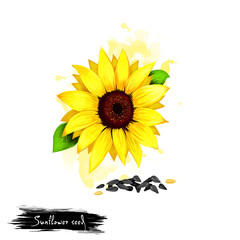 Hand drawn illustration of Sunflower seeds or Helianthus annuus isolated on white background. Organic healthy food. Digital art with paint splashes effect. Graphic clip art for design, web and print.