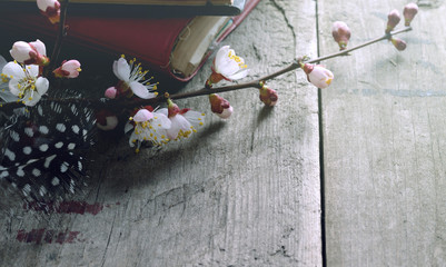still life with old books apricot blossom flowers and retro camera on a wooden surface
