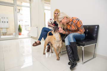 Owners with his dogs in Veterinary clinic