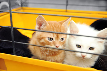 Cute little kittens in a cage