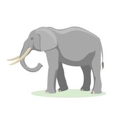 African elephant cartoon vector illustration.