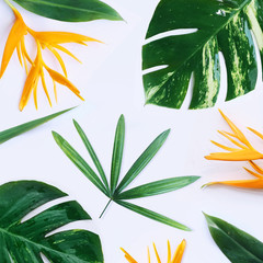 tropical plants on white background