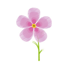 drawing magnolia flower flora ornament vector illustration eps 10