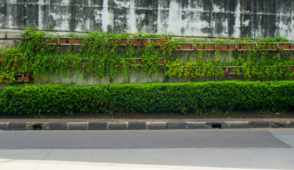 Green vines covering flyover wall at side of the road photo taken in Jakarta Indonesia