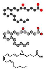leukotriene A4 (LTA4) molecule.