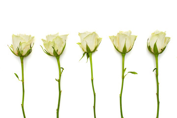 Gentle white roses lying on a flat lay