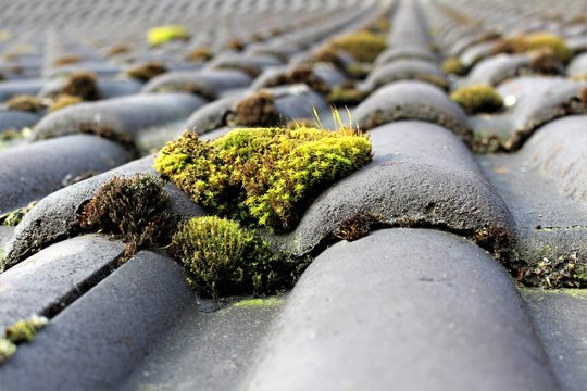 An image of roof with moss