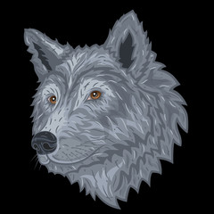 Wolf head on a black background. Vector illustration.