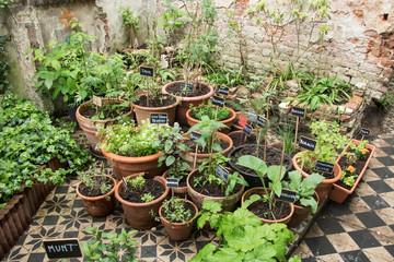 Urban Garden in Bruges