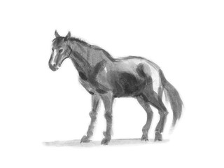 Hand drawn brushstroke sketch on paper of horse