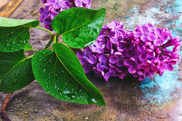 Wall Mural - Branch with spring lilac