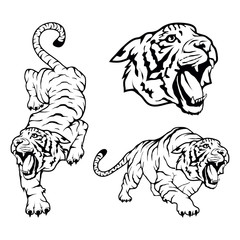 Tiger set, isolated on white background, illustration, suitable as logo or team mascot