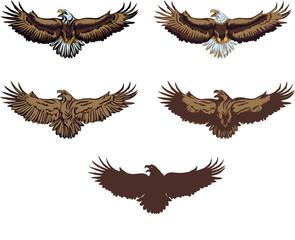 The eagle, soaring eagle, flying, illustration, color, vector