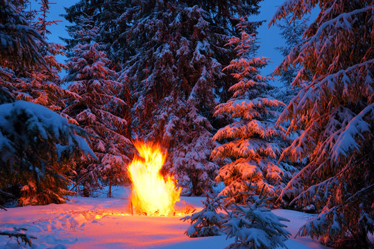 Large bright bonfire of a winter forest at night.