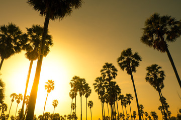 Palm trees with sunset silhouette