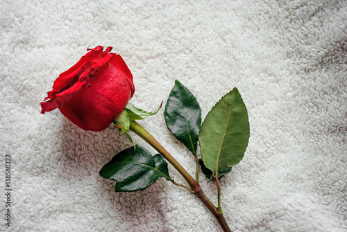 Rosa Rossa Su Sfondo Bianco Stock Photo And Royalty Free Images On