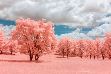 Dramatic Infrared Image of Forest