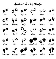 Animal tracks - foot print guide vector