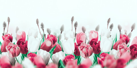 Multi-colored tulips with willow and butterflies. Easter flowers, floral background.