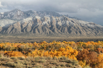 Sandia Mountains and cottonwood forest in autumn along Rio Grande in central New Mexico